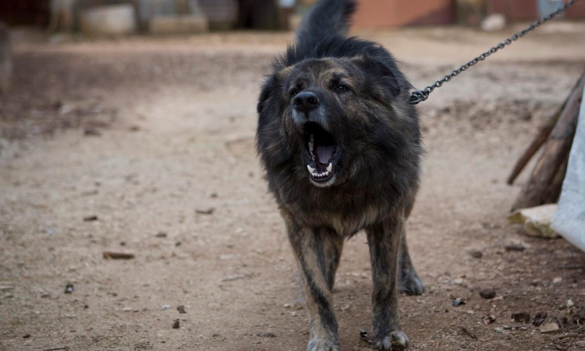 Si Un Perro Te Muerde Estas Son Las 7 Cosas Que Debes Hacer Noticieros Televisa