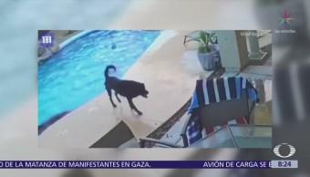 Perro rescata a otro de ahogarse en Arizona