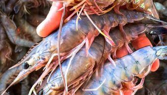 Pescadores de Sonora buscan empleo en otros estados por veda