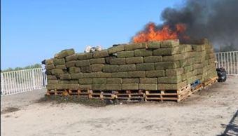 pgr incinera mas cinco toneladas marihuana coahuila