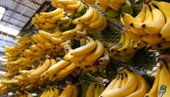 Plátano Comer Beneficio Consumir Fruta Contribuye