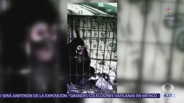 Rescatan a mono araña de incendio en Iztacalco