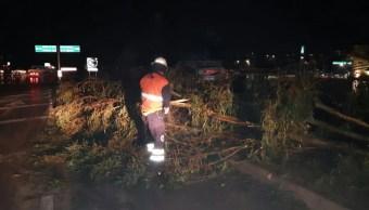Fuerte lluvia tira árboles en calles en Puebla