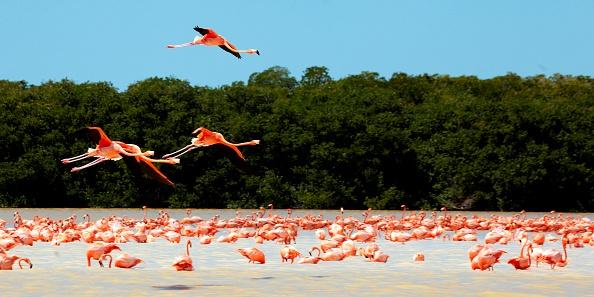 Deforestación en Yucatán podría ser irreversible