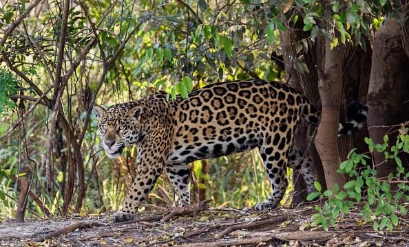 Fototrampero permite avistamiento de especies protegidas