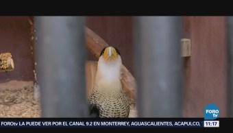 Retratos de México: Alimentación de aves en zoológico de Aragón