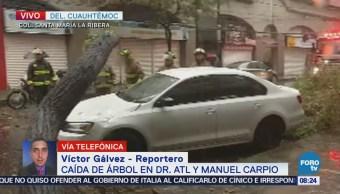 Cae árbol y afecta auto en la colonia Santa María la Ribera