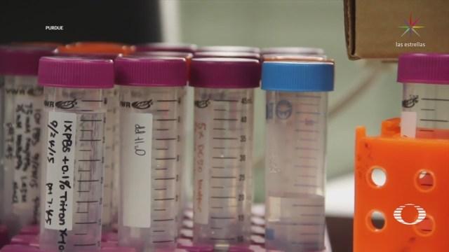 Descubren nuevo compuesto para tratar infecciones