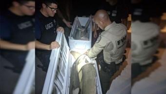 EU intercepta pesquero con tiburones descuartizados