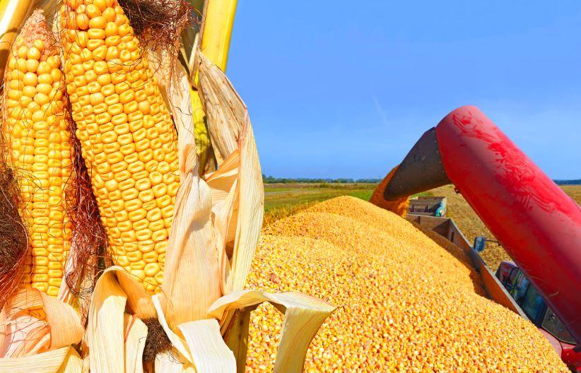 México estudia imponer aranceles a maíz y soja