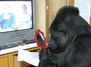 Gorila Koko frente al espejo. (@kokotweets)