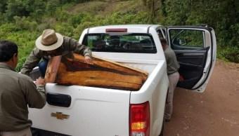 profepa madera enebro guerrero proteccion ambiente