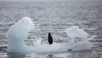 Se triplica velocidad que se derrite hielo Antártida