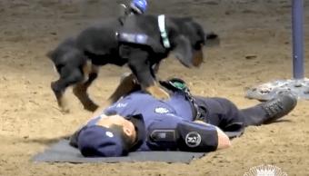 video-perro-aprende-reanimar-su-companero-policia-madrid-espana