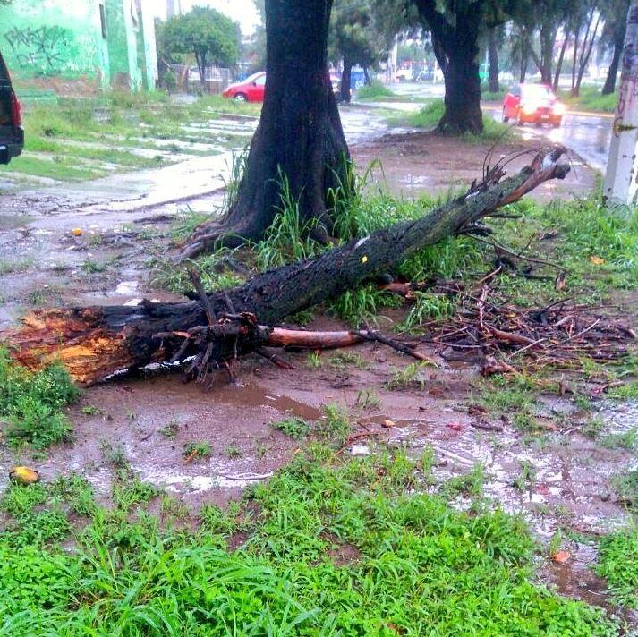 inundaciones vehiculos arboles zapopan guadalajara metropolitana
