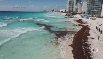 con mayor cantidad de sargazo en Quintana Roo