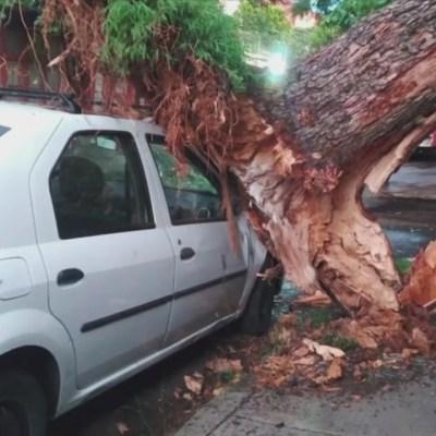Árbol cae sobre dos casas en Coyoacán