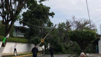 Tormenta inunda vialidades y derriba árboles en Guadalajara