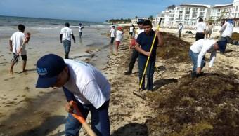 Arribazón atípica de sargazo invade las playas de Quintana Roo