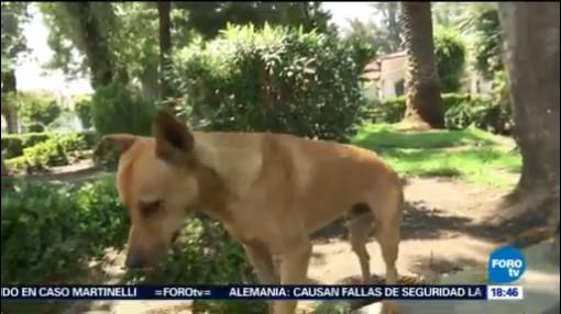 Clínica Tláhuac Recibe Perros Callejeros Poner Adopción