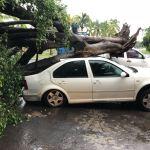 Lluvias provocan inundaciones y caída de árboles en Colima