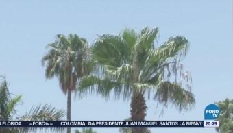 Continúan Temperaturas Extremas Sonora Clima Calor
