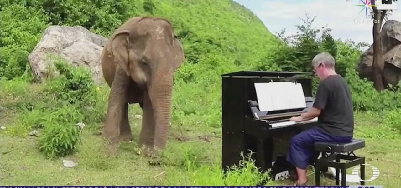 En Tailandia, una elefante ciega baila al escuchar el piano