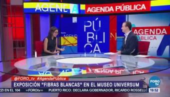 Exposición Fibras Blancas Museo Universum CDMX