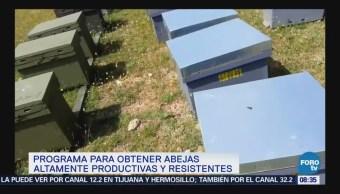Cuba aplica programa para obtener mejores abejas