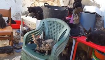 Rescatan a 101 gatos en una vivienda de 37 metros en España