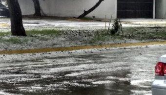 Granizada en Guadalajara derriba árboles; no hay lesionados