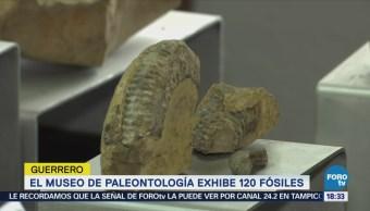 Guerrero Exhibe Fósiles Recuperados Territorio