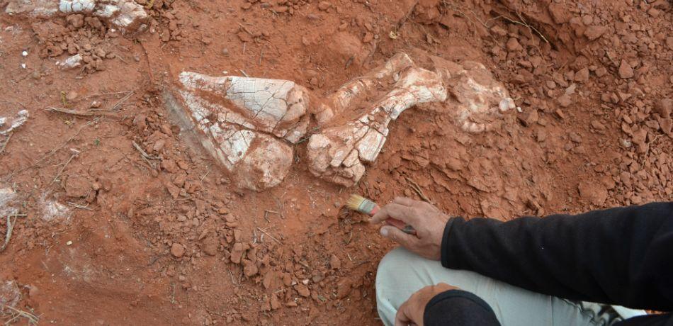 hallan-argentina-fosiles-primer-dinosaurio-gigante-tierra-paleontologia