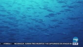 Lanzan iniciativa para defender el Mar de Cortés