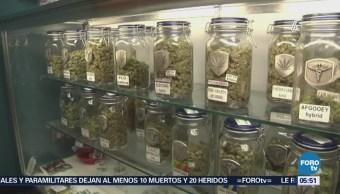 Los vacíos en la legalización de la marihuana medicinal