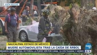 Mueren cuatro personas al caer un árbol