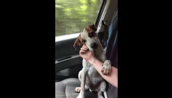 Video Perro Agradece Mujer Que Lo Rescató, Perro Tierno Gesto, Mujer Rescató Perro, Perro Rescatado, Perro, Perros
