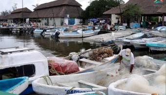 Inicia veda caracol Campeche; instalan filtros seguridad