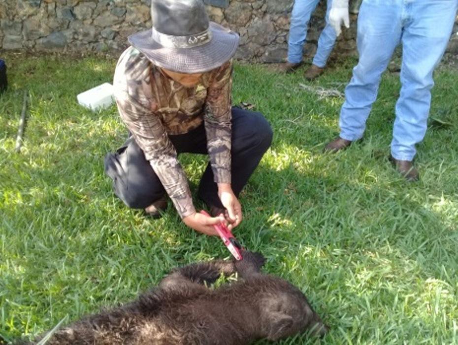 Profepa libera una osa capturada en Nuevo León | Noticieros Televisa