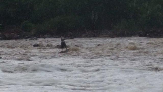 Rescatan hombre atrapado en río de Jalisco