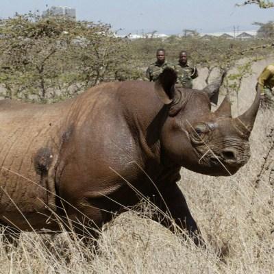 La Tierra perdió al 60% de sus animales salvajes en 44 años