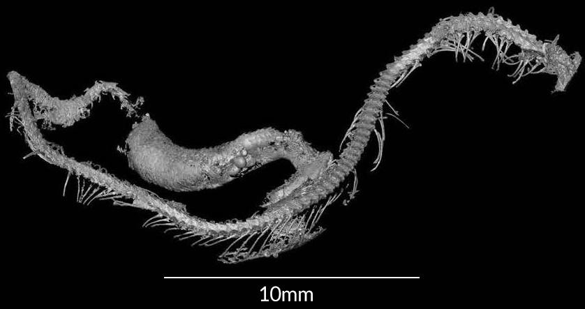 serpiente-bebe-permanecio-intacta-100-millones-anos-ambar-prehistoria