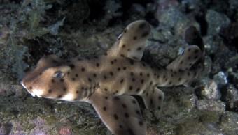 Recuperan tiburón robado en una carriola de acuario en Texas