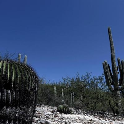 Unesco inscribe el Valle de Tehuacán-Cuicatlán como Patrimonio de la Humanidad