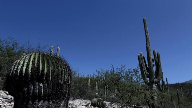 Unesco inscribe el Valle de Tehuacán-Cuicatlán como Patrimonio