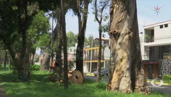 Vecinos Naucalpan Exigen Dictámenes Árboles Riesgo