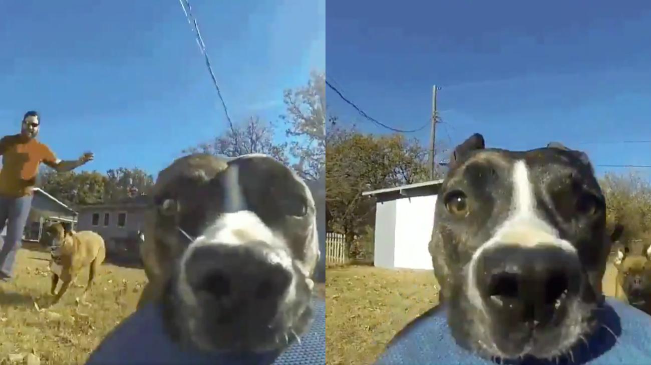 Un perro roba una GoPro y filma su fuga