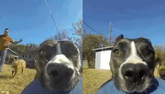 Video Perro Roba Cámara Go Pro Escape, Video Perro Roba Cámara, Perros, Perro, GoPro, Huida Perro Ladron