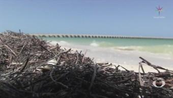 Alertan por llegada de sargazo en Yucatán