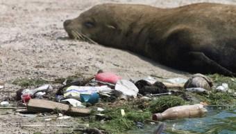 animales-contaminacion